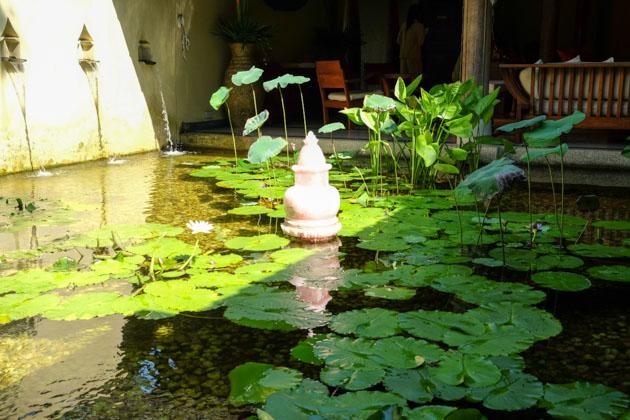 Samui-kamalaya-lotus