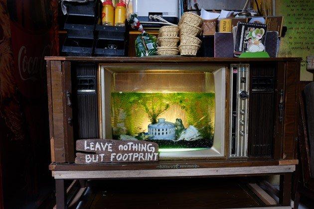 malacca-calanthe-fish-tank