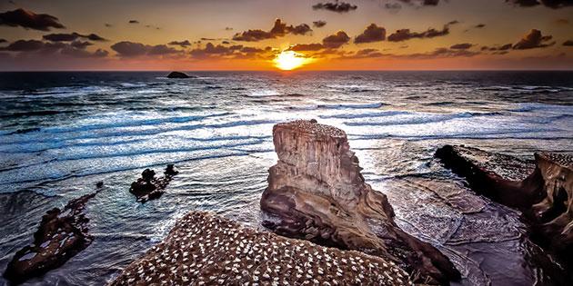 auckland-muriwai-beach
