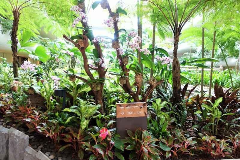 Shangri-la garden wing rooms