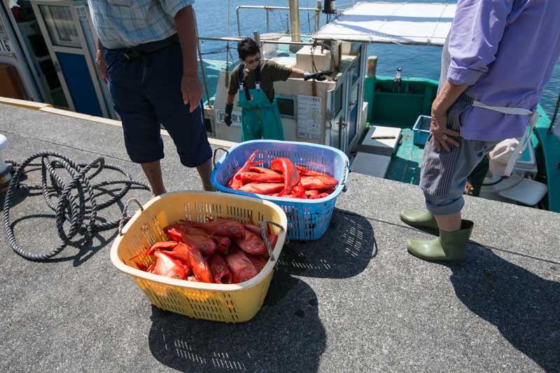 miyakejima island tokyo-5144