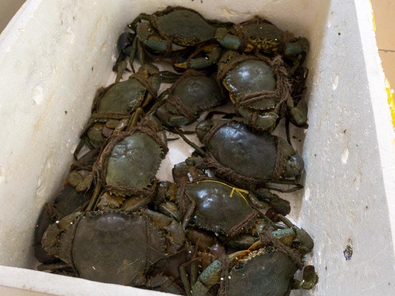 Wen Wen - Fresh Crabs