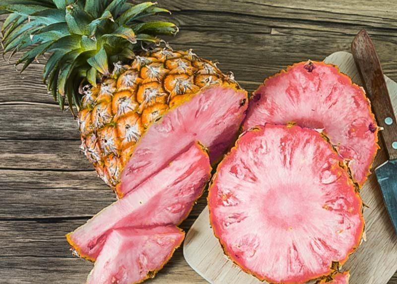 Pink Watermelon-2
