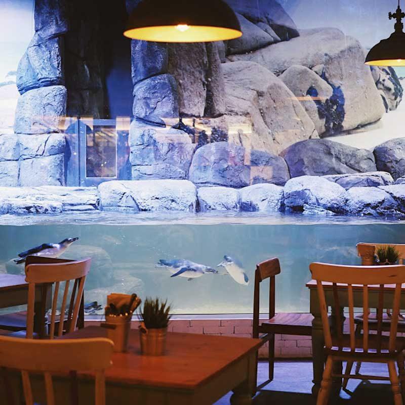 Neo Soho Aquarium: Pingoo Restaurant: Dine With Penguins In A Beach Shack