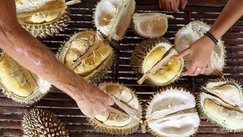 Durians-Fruits-Picnic-1-800x450 Durians & Fruits Picnic (Singles Only): Meet Your Queen While Eating The King Of Fruits At The Botanic Gardens This 29 July '17
