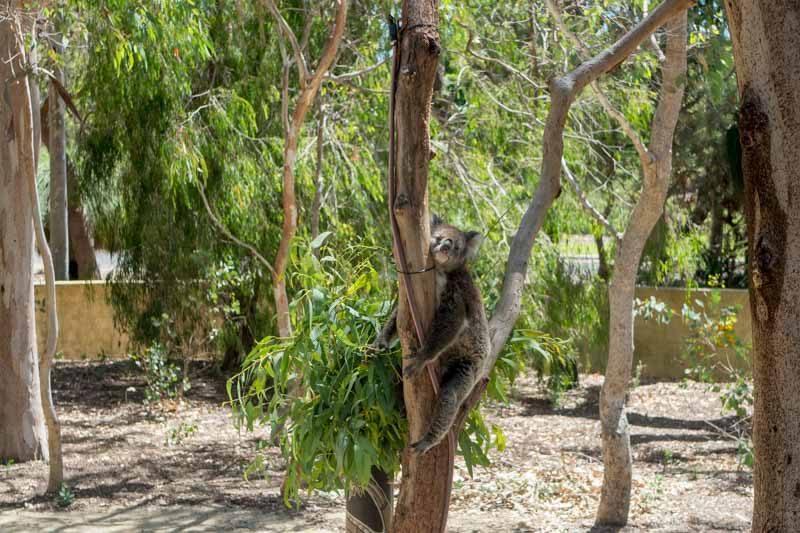 perth-tourism-western-australia-30.jpg