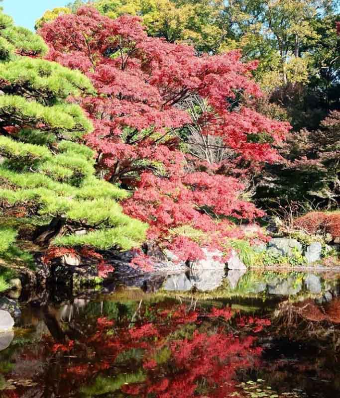 Changi Recommends Tokyo Japan Guide Itinerary Online 11