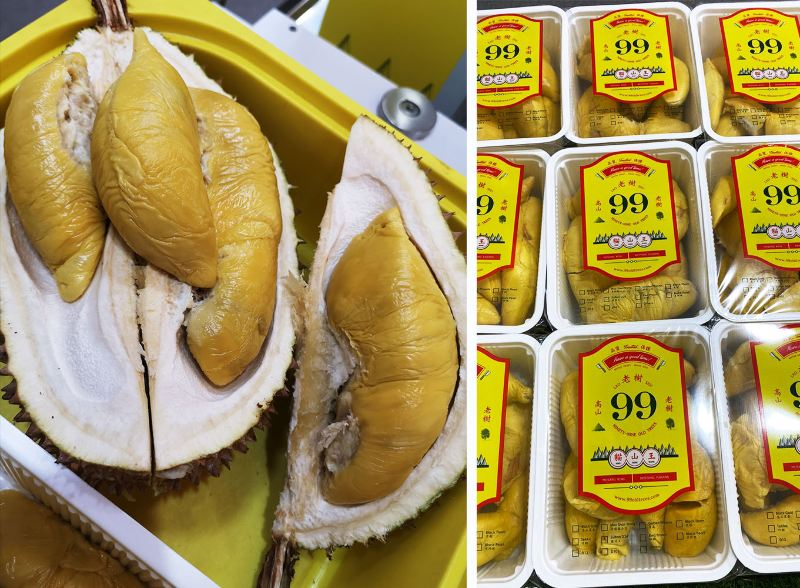 Durian Delivery 99 Old Trees Online 4