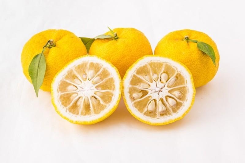 Online Yuzu citrus fruit