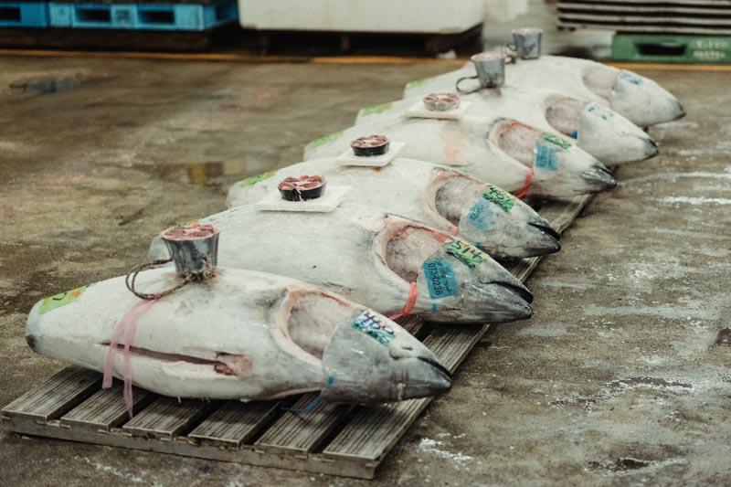 Produce Explained Fish Online 11