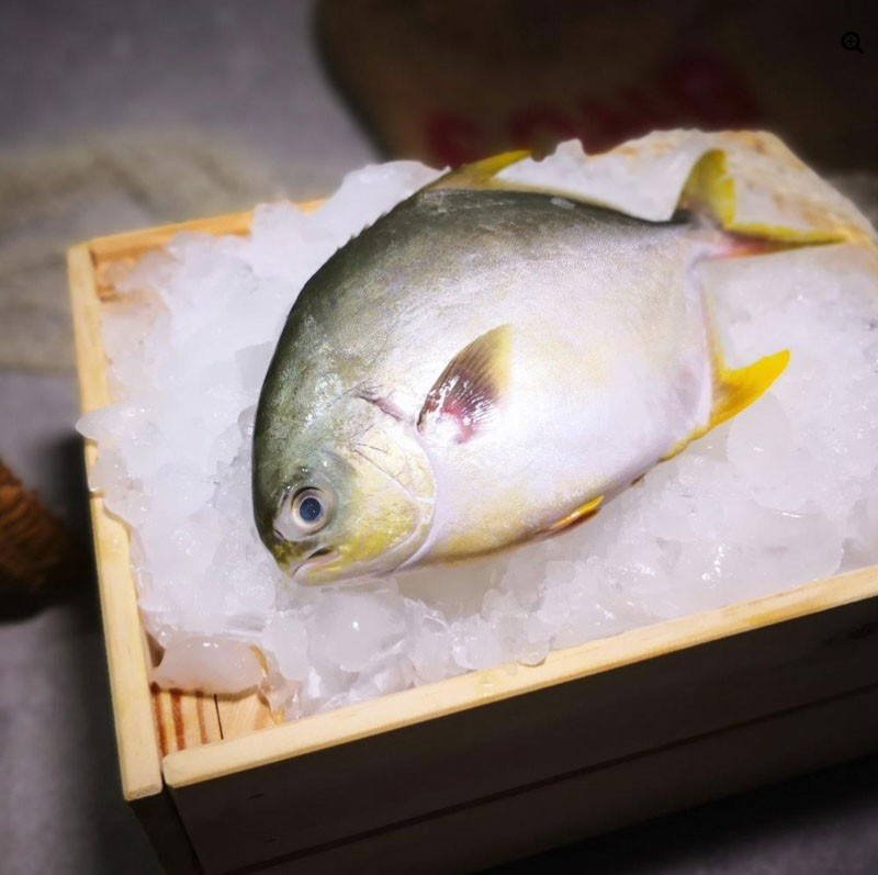 Produce Explained Fish Online 16
