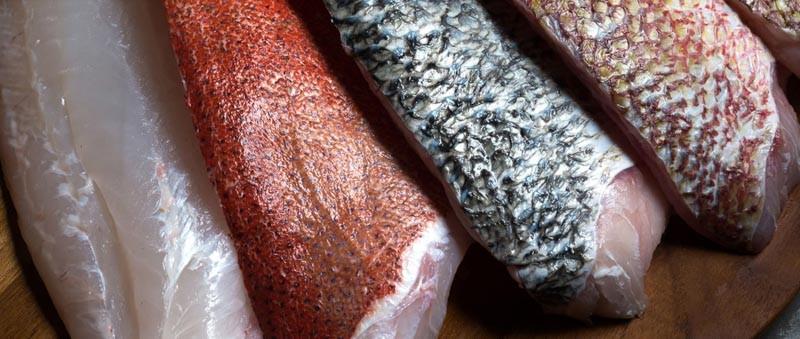 Produce Explained Fish Online 17