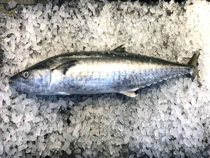 Produce Explained Fish Online 5