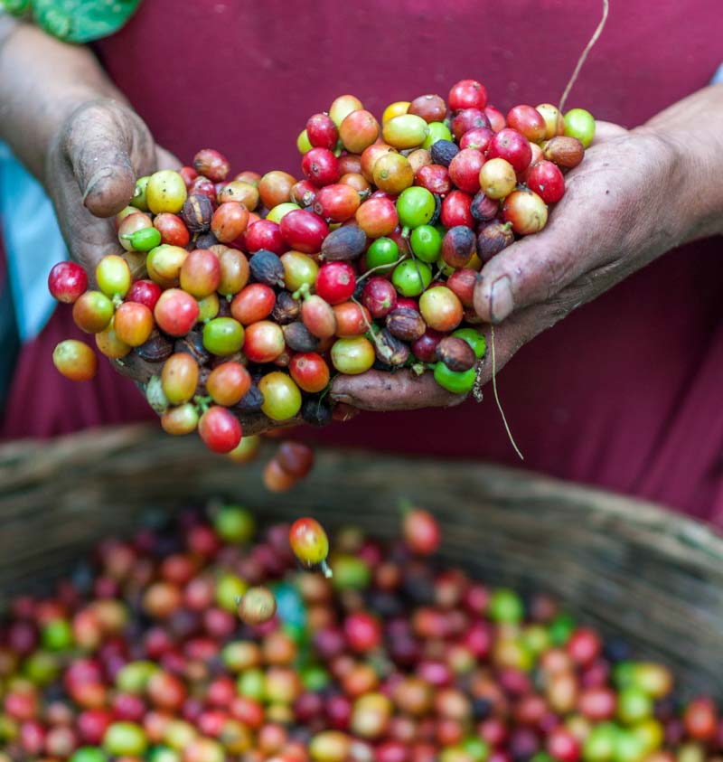 Produce Explained Coffee 11